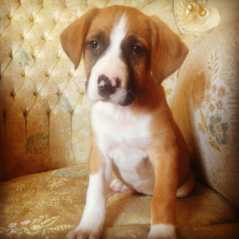 Villalobos Dog Rescue In New Orleans