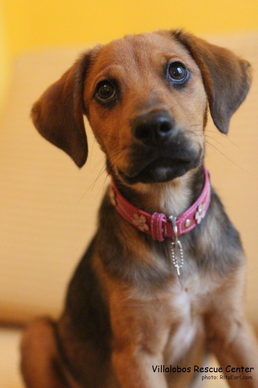 La Dog Rescue