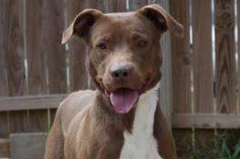 Dogs Archive - Villalobos Rescue Center