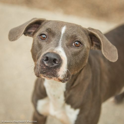 Free Dog Adoption New Orleans