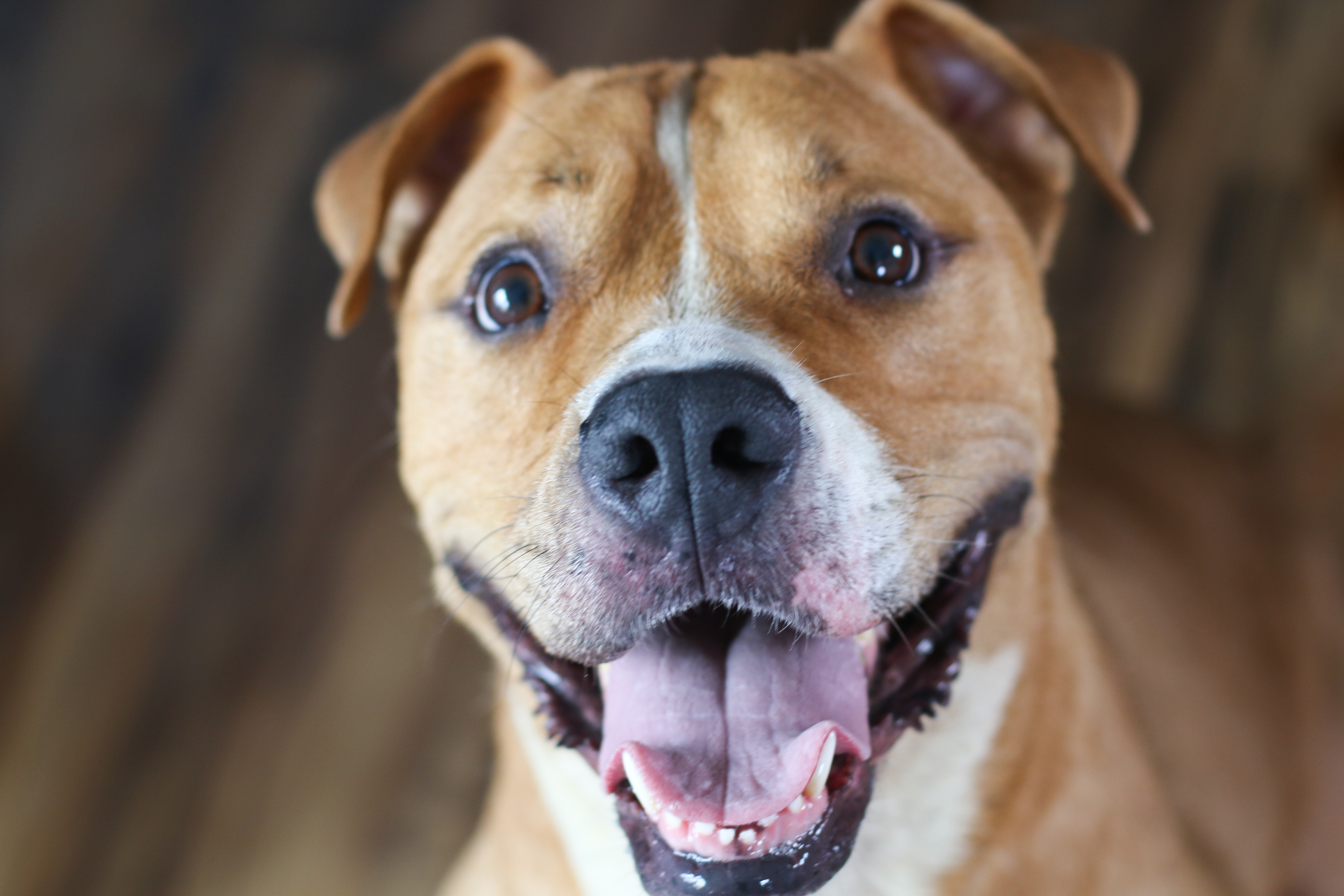 Can You Donate Old Meds To A Dog Rescue